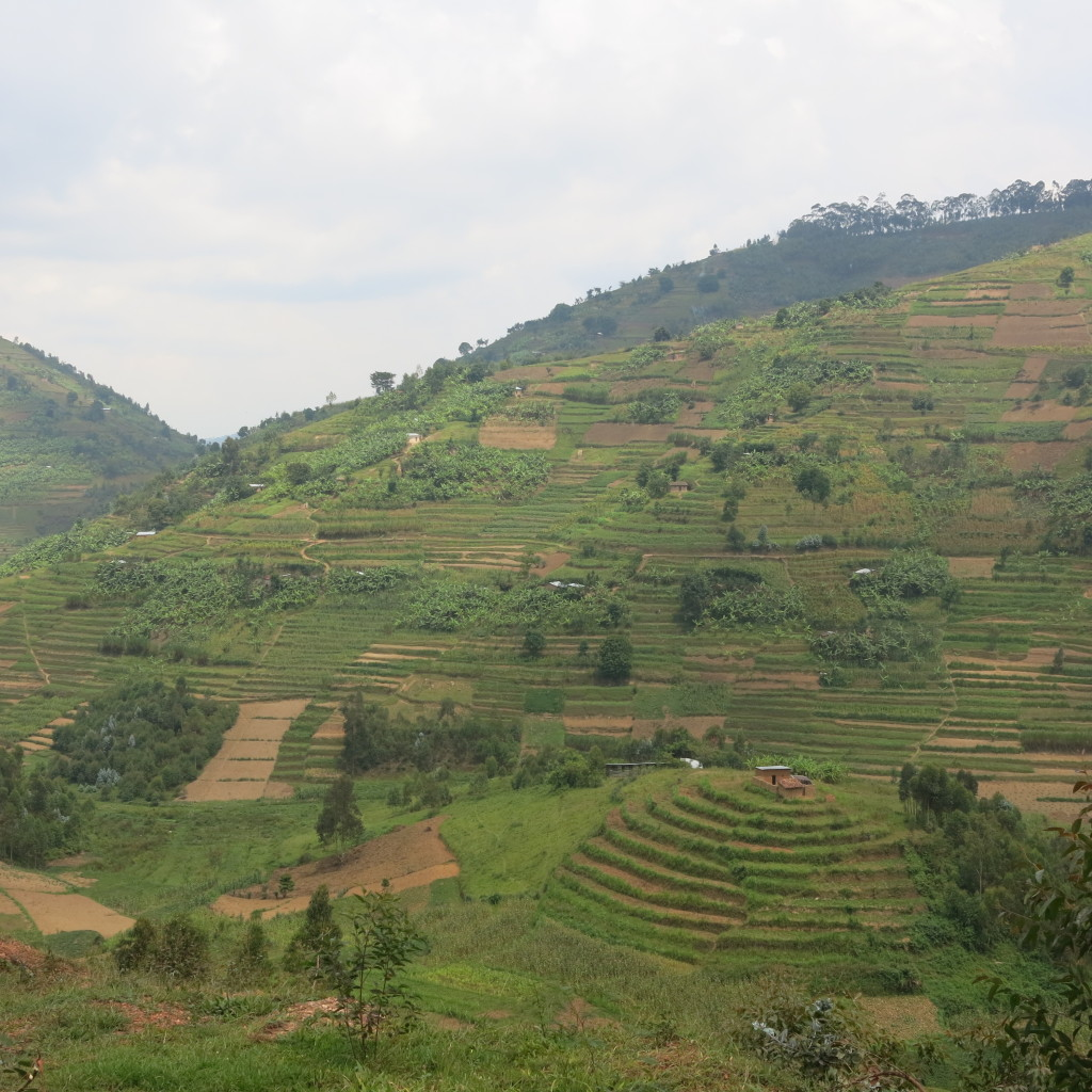 The economics of land degradation food and the world for Terrace farming definition