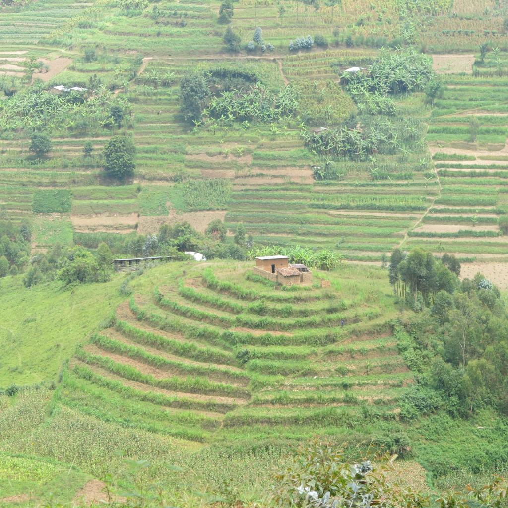Terrace landscape Rwanda